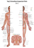 Set Chart 1+2 Tung's Extraordinary Acupuncture Points on the regular channels, Poster